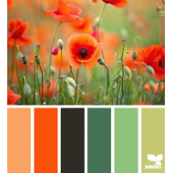 ColorNature 2